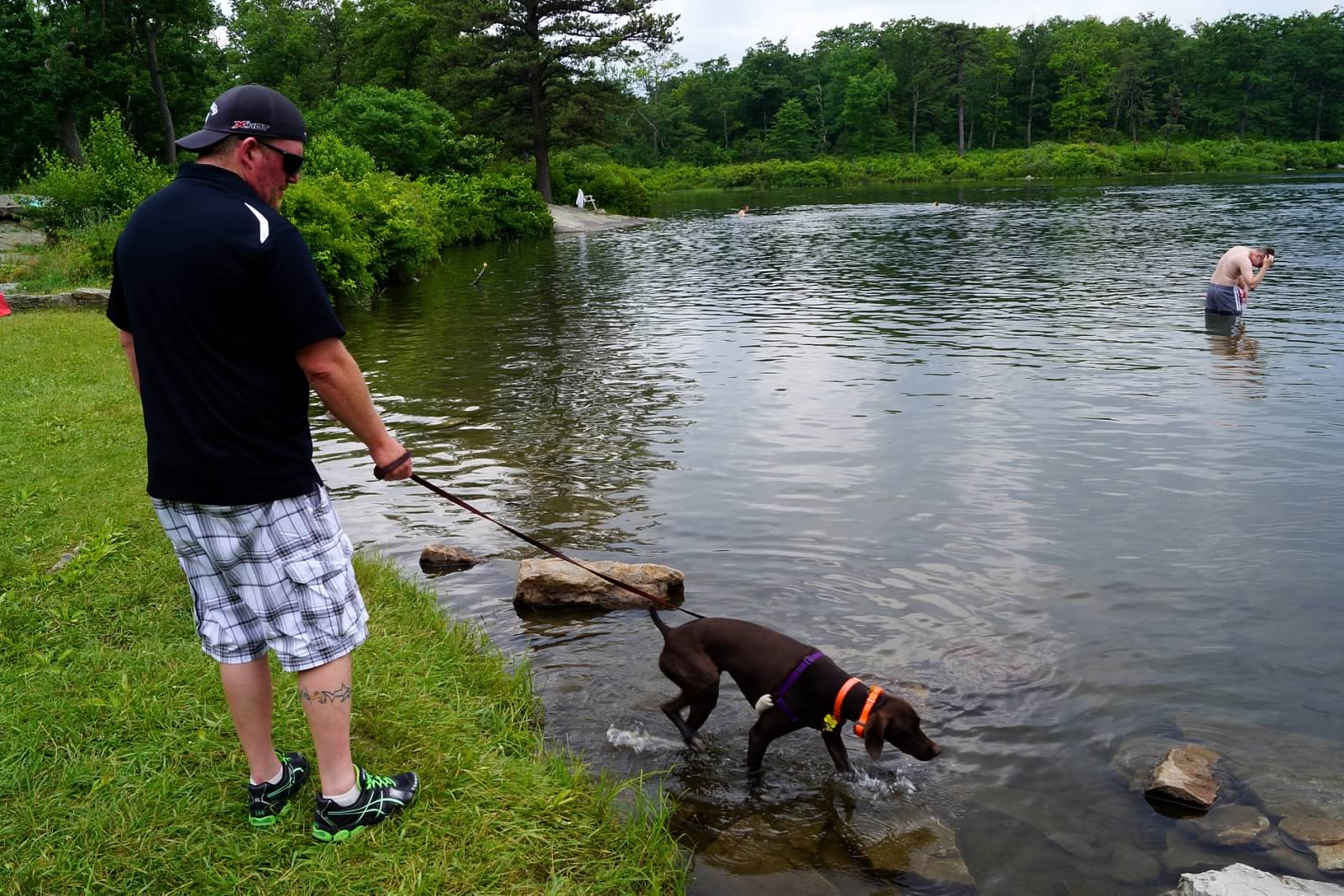 Dog Rescues In Elkton Md
