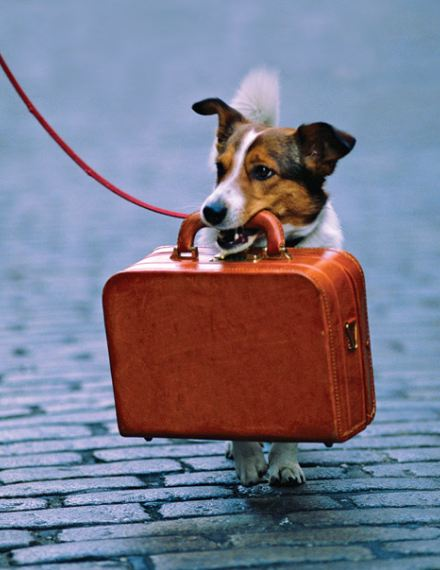 Traveling with your Dog 3