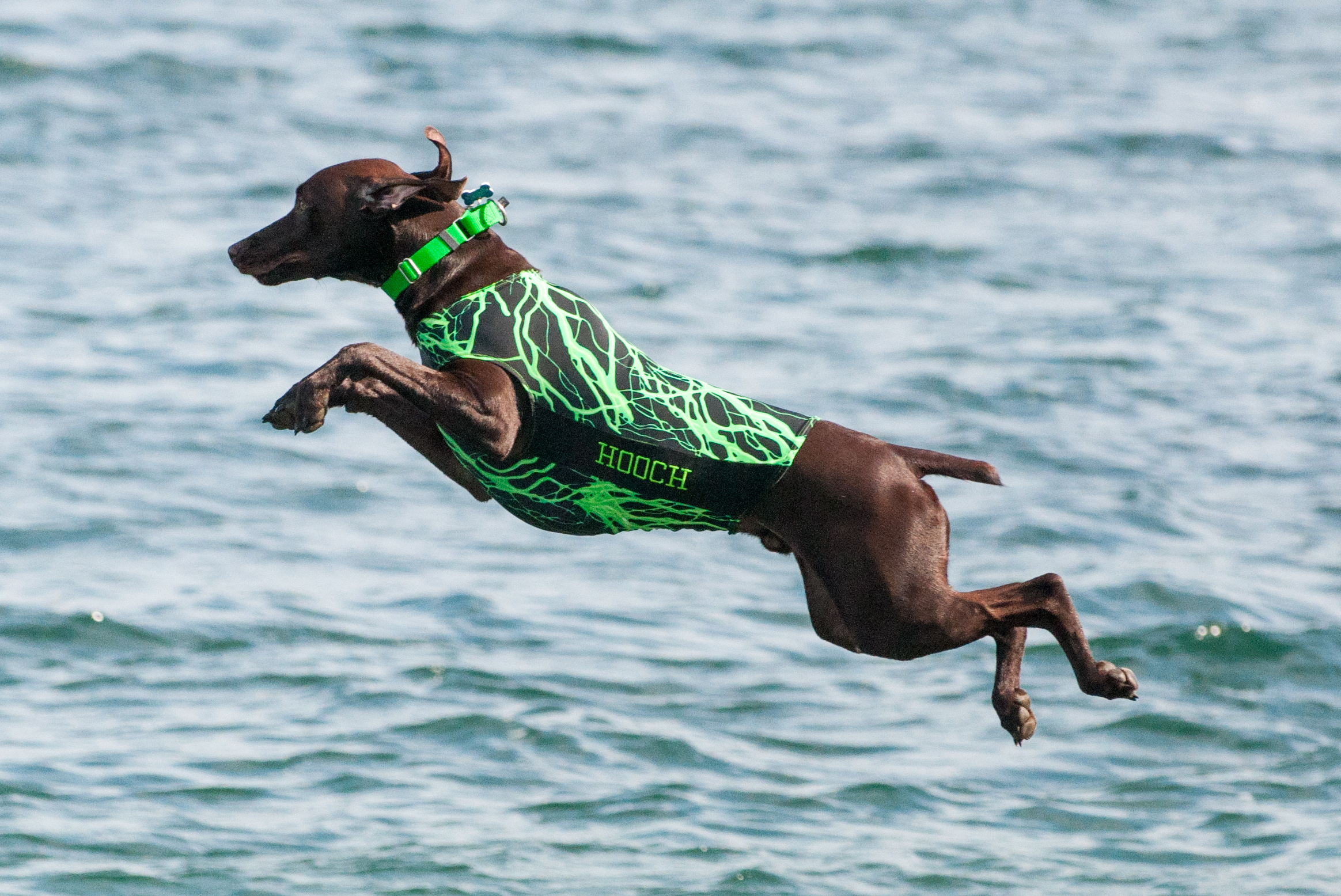 Big Air Dog Competition